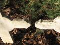 Apu testvéreinek sírja, lázi-i temető